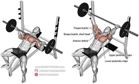 reverse grip bench press upper chest 25 best ideas about bench press on pinterest bench
