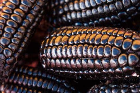 cornrowed pubic hair corn rowed pubes purple corn food thy medicine pinterest