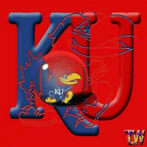jayhawk tattoo designs 79 best rock chalk jayhawk images on kansas