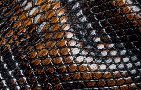 Leopard Chetah Skin Iphone Dan Semua Hp wallpaper animal texture images for