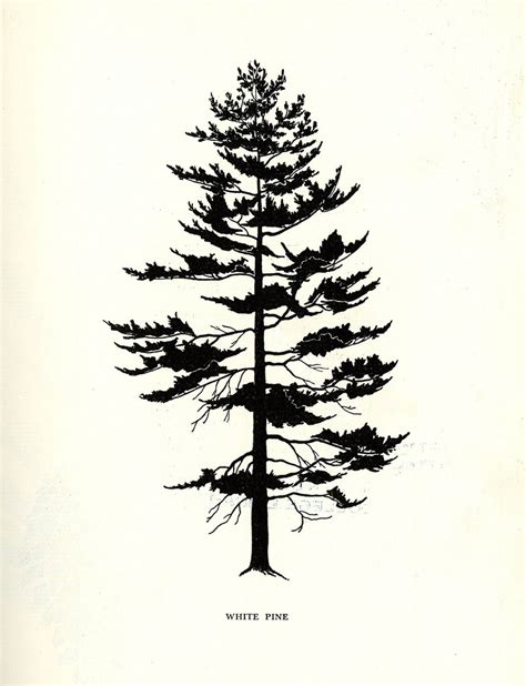 pine tree silhouette tattoo www imgkid com the image