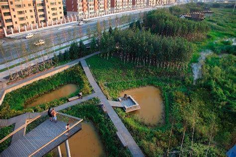 Cincau Tawon Mikro sponge cities what is it all about