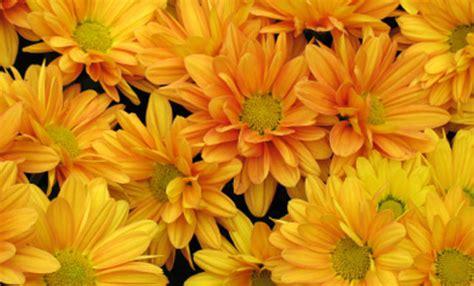 fiori recisi nomi fiori autunnali 6 piante colorano l autunno leitv