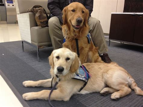 canine comfort therapy dogs arrive in boston to comfort survivors of