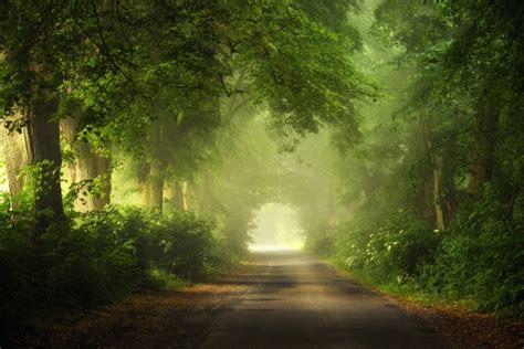 wallpaper scenic view trees path road wallpapermaiden