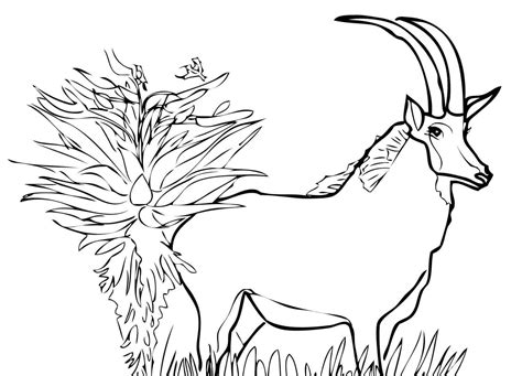 coloring pages springbok springbok coloring pages and print for free