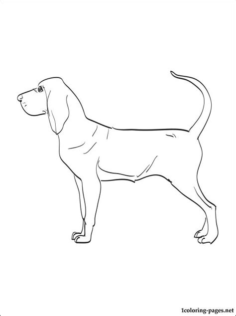 bloodhound coloring page coloring pages