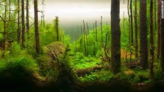 Aquascaping Ideas For Planted Tank 画像 外国人が水草で作る水中盆栽のレベルが芸術の域に達している Naver まとめ