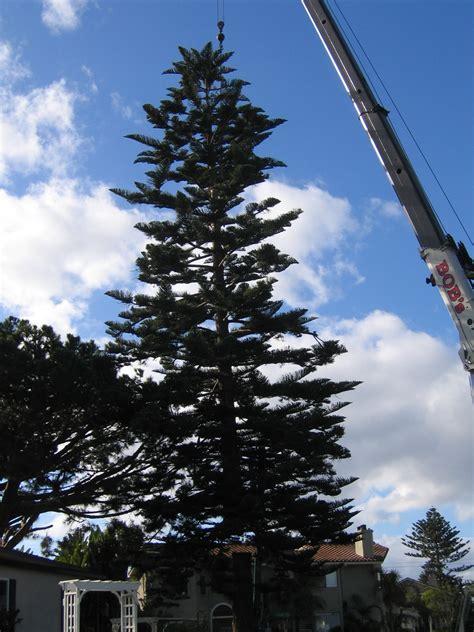 ob christmas tree 2006 ocean beach san diego ca