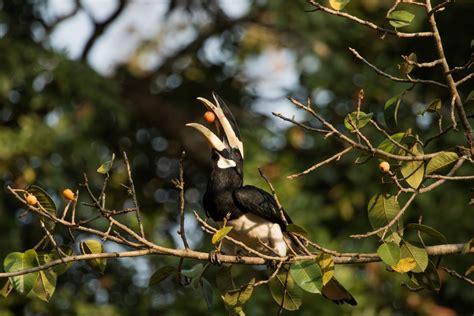 new vital bird habitat identified in india birdlife