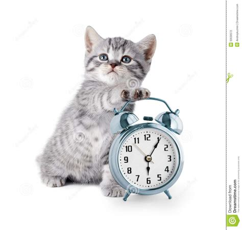 Adorable Kitten With Alarm Clock Stock Photo   Image: 33530572