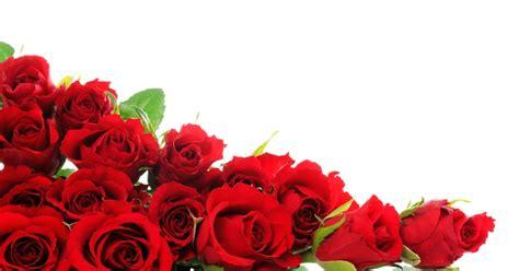 imagenes de rosas jpg hellojesscat