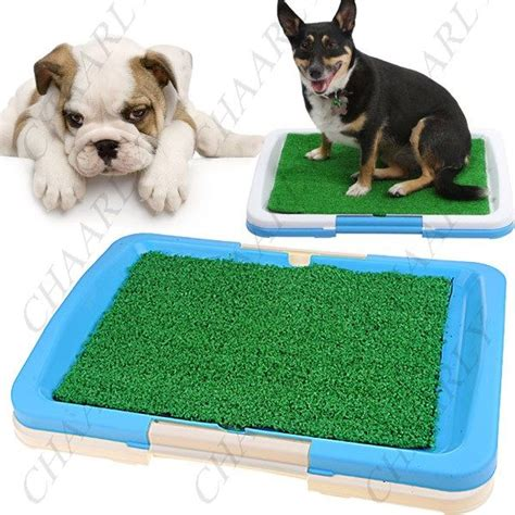 indoor grass for dogs 1000 images about indoor grass for dogs on indoor potty pets and trays