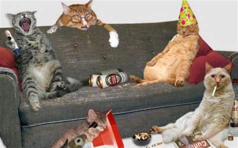 imagenes chistosas de cumpleaños borrachos animales borrachos chistosos imagui