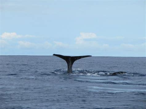 turisti per caso azzorre tour portogallo azzore whale wathcing viaggi vacanze