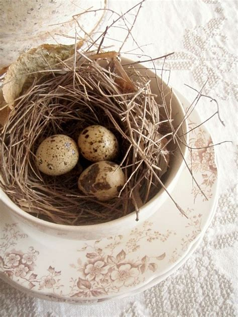 Birds Nest Cottage by 311 Best Images About Nesting Bird Nests Eggs On