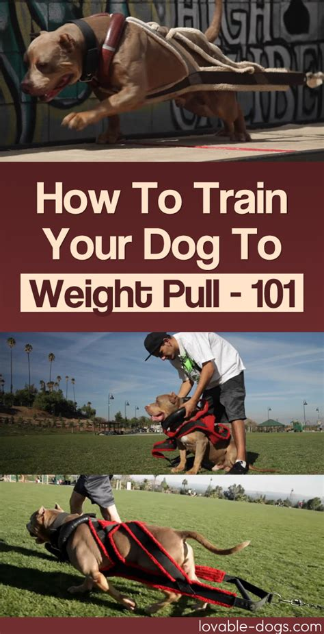 how to a to pull weight lovable dogs archives page 11 of 32 lovable dogs
