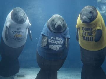 geico manatees sea cows t shirts commercial