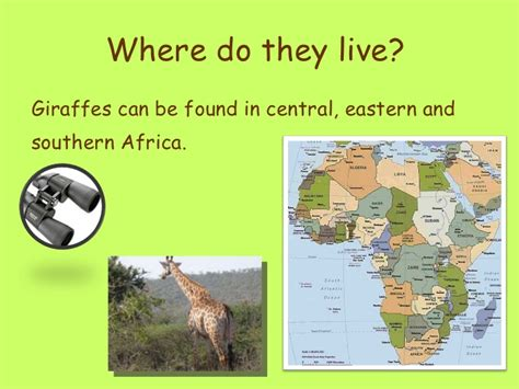 where does live giraffes ppt