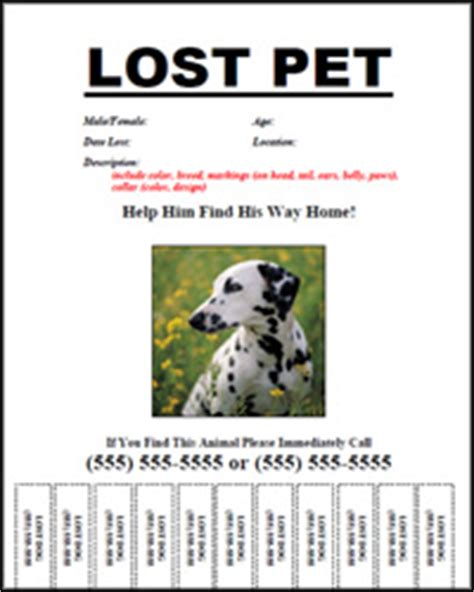 lost pet template free lost pet flyers colorado pets pet services and