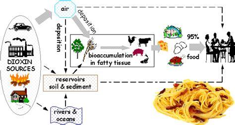inquinamento alimentare inquinamento degli alimenti