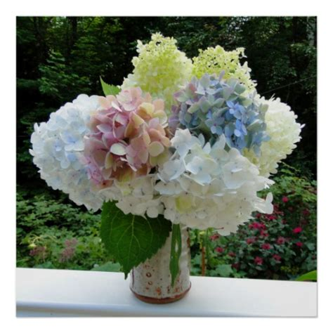 Can You Cut Hydrangeas For A Vase by Cut Hydrangea Flowers In A Vase Photography Poster Zazzle