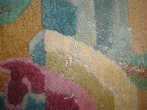 mottenbefall teppich schaedlingsbefall