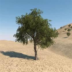 image of tree 3d model ghaf tree