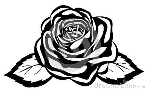 imagenes en blanco y negro de rosas rosa blanco y negro abstracta primer aislado imagen de