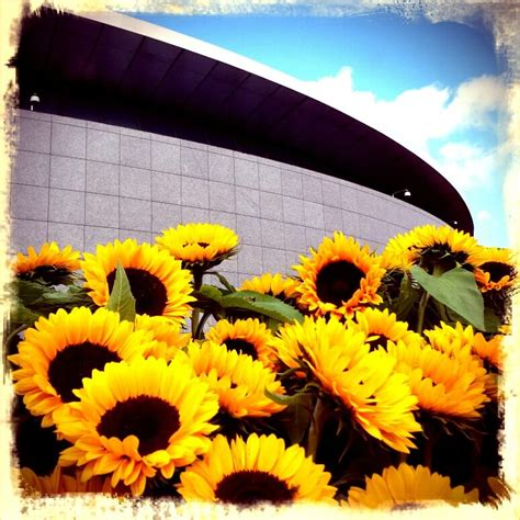 van gogh museum amsterdam zonnebloemen sunflowerfields forever bureau rosalisavilla