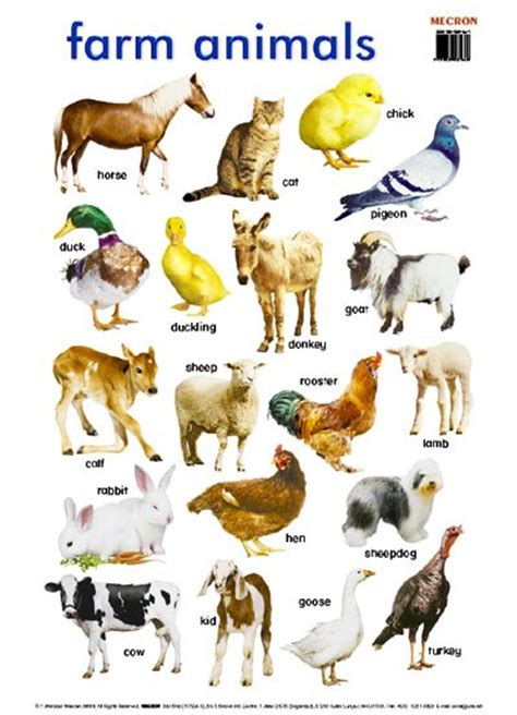 farm names 1000 images about farm animal list names on animal pictures memories and