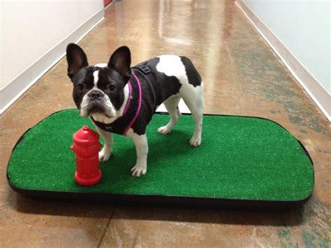 indoor puppy potty go go indoor potty pet 420 s san pedro st downtown los