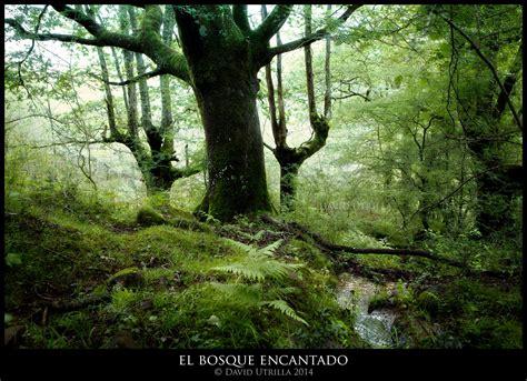el bosque encantado bosque encantado car interior design