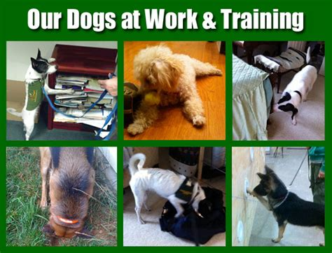 bed bug sniffing dogs bed bug detection with bed bug sniffing dogs from regional