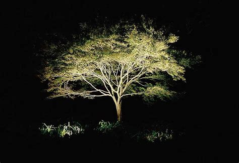 landscape tree lighting light up the rock design llc