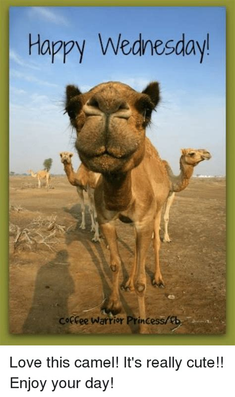 funny hump day camel memes of 2017 on sizzle