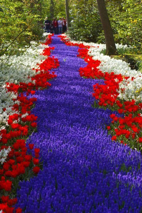 arte giardino oltre 25 fantastiche idee su arte topiaria per giardino su