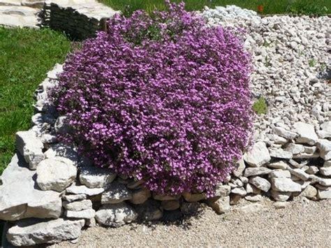 piante giardino roccioso giardini rocciosi fai da te progettazione giardini