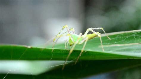 imagenes de uñas en verdes ara 241 as verdes nikon d5100 1080p 30fps youtube