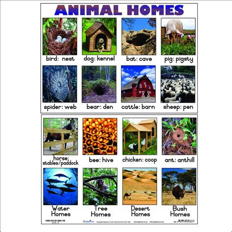 animal homes depicta
