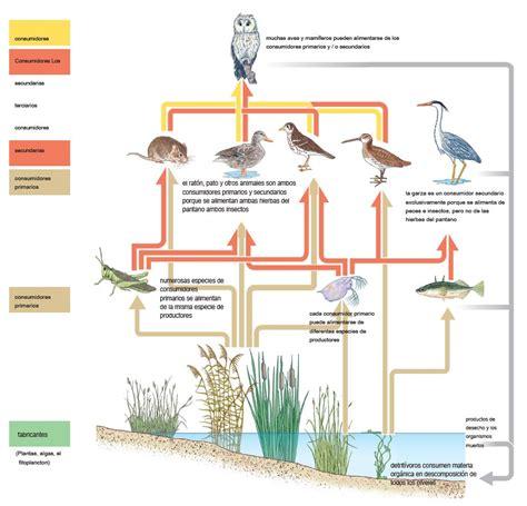 cadenas alimenticias concepto definici 243 n de cadena alimenticia concepto significado y qu 233 es