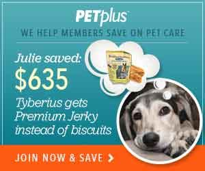 can dogs take pepto bismol is it safe to use pepto bismol for dogs petcarerx