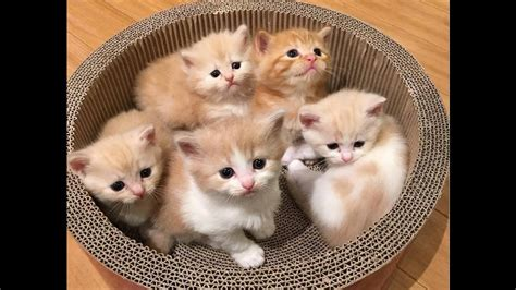 the cat in the beautiful cats in the world www pixshark com images galleries with a bite