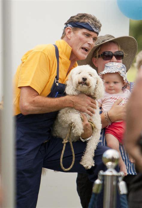 david hasselhoff puppies david hasselhoff washes dogs for apprentice zimbio