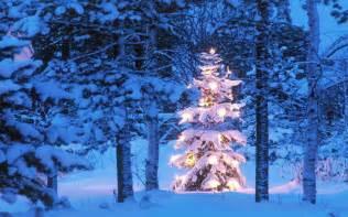 Outdoor christmas tree hd desktop wallpapers merry christmas