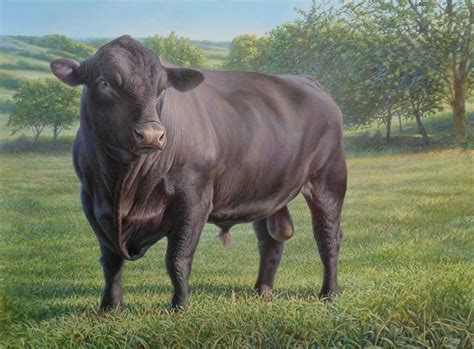 black angus black angus bull 2 painting by hans droog
