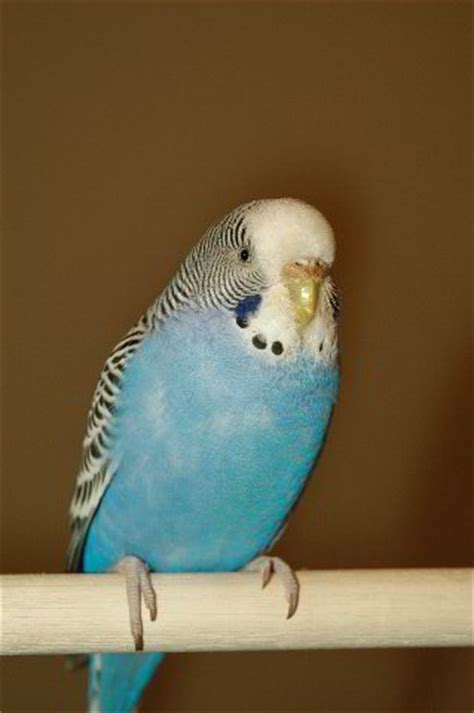 pet birds pictures to pin on pinterest pinsdaddy