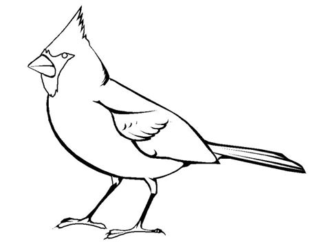 cardinal coloring pages preschool cardinal bird coloring page embroidery pinterest