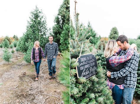 christmas tree farms in sacramento tree potted tag remarkable tree potted photo ideas