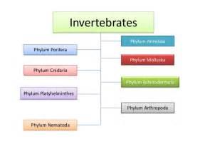 invertebrates edtech101